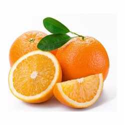 Oranges for Juice Florida