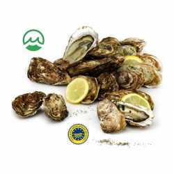 Oysters Marennes Oléron